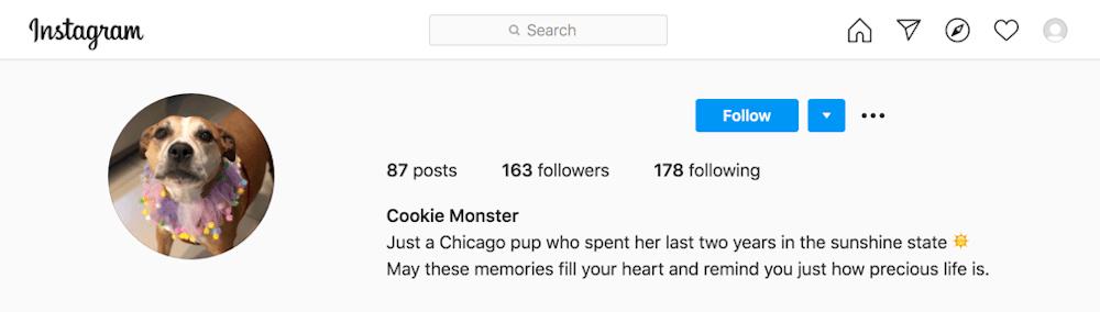 Cookie Instagram