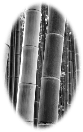 Bamboo - SmarterU LMS - Online Training Software