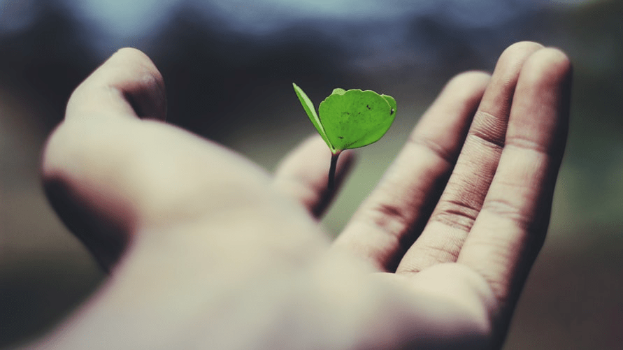A hand holding a growing plant.