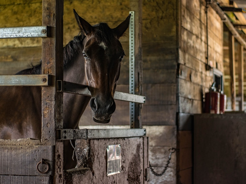 brown horse in a stable