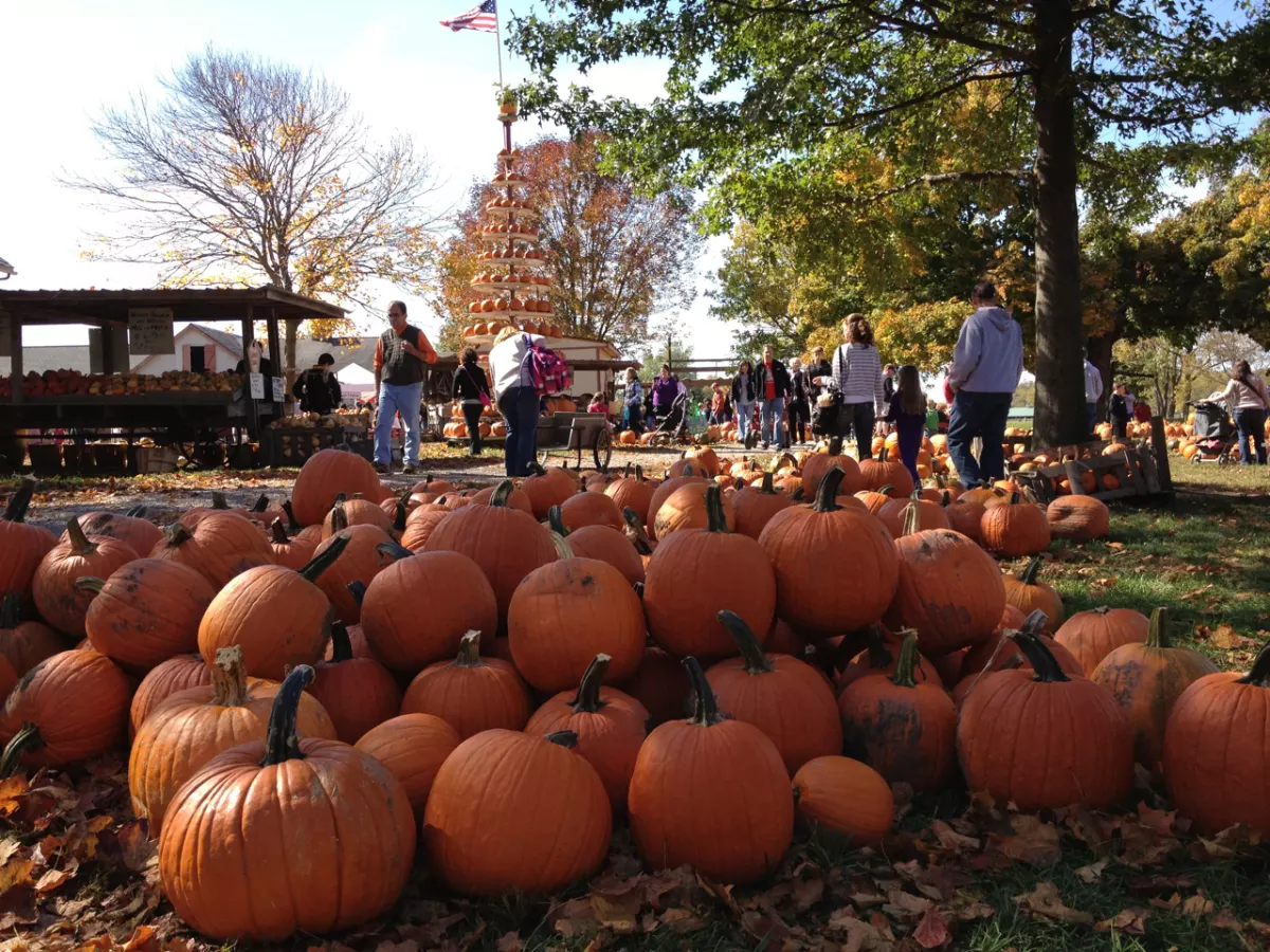 crowd of people and pumpkins