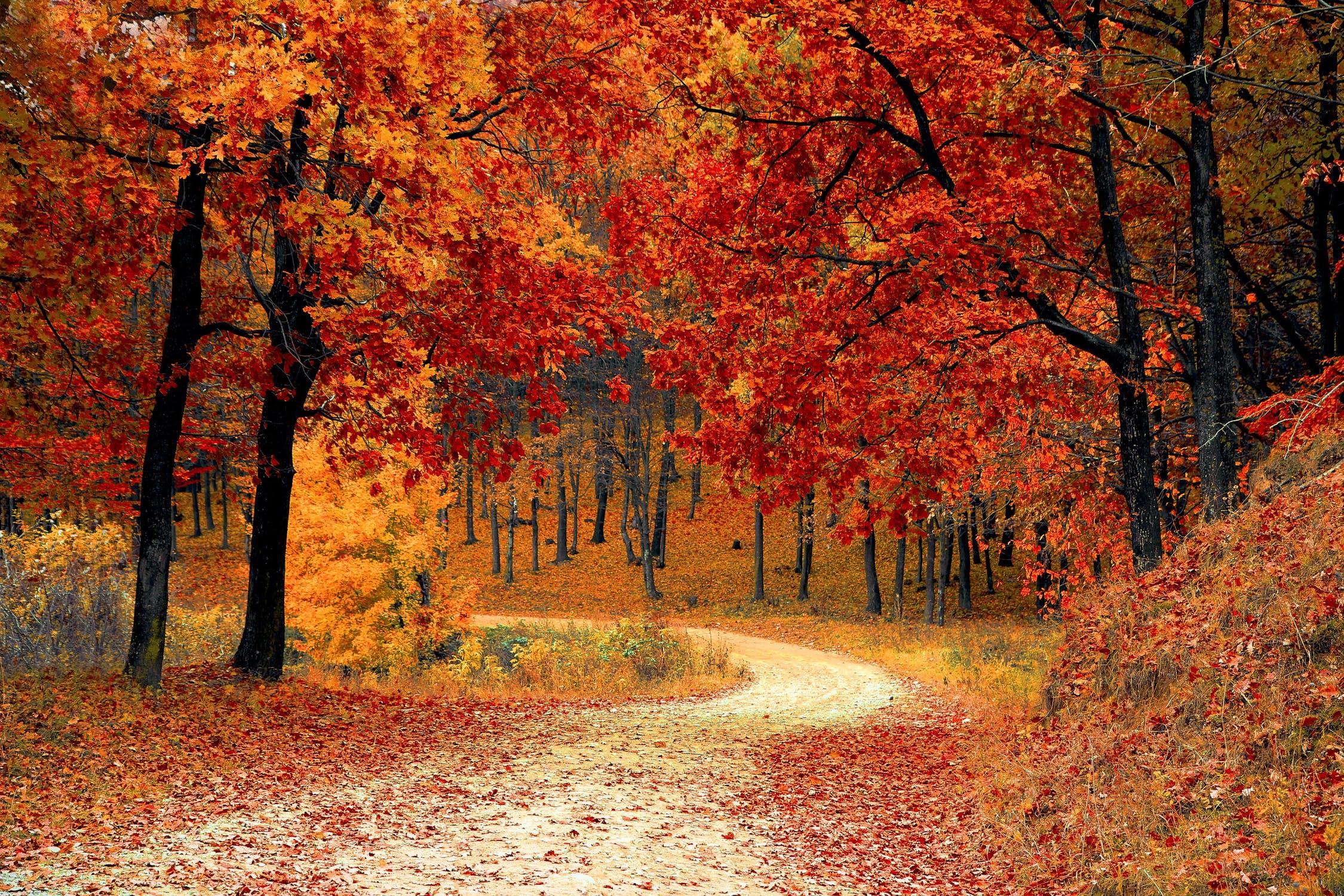 fall folliage