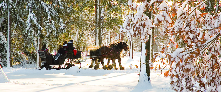 people riding on a horse carriage through the snow