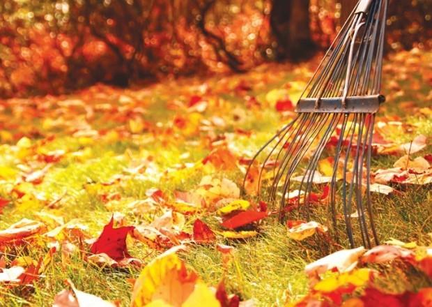 rake and fall leaves