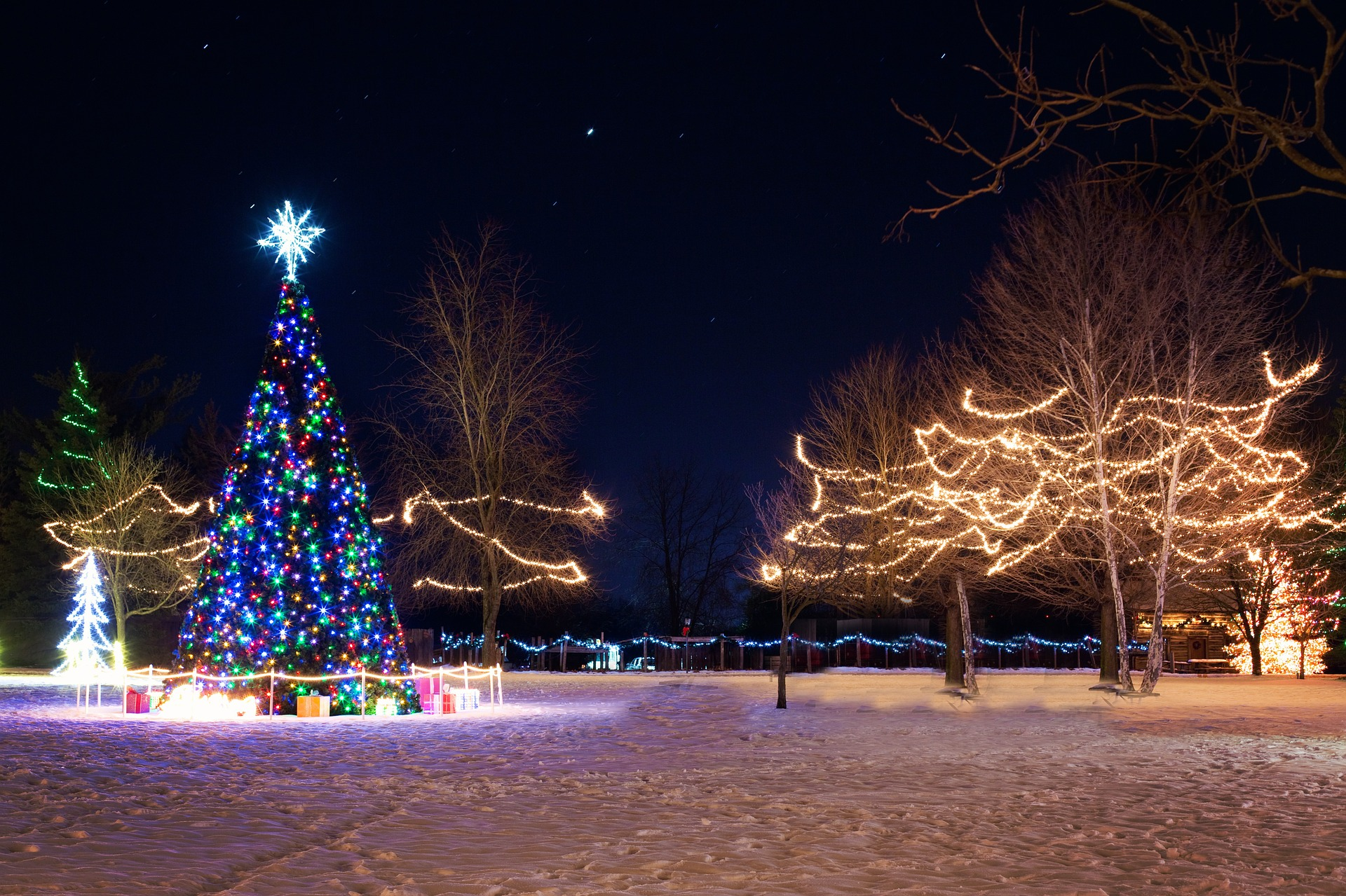 lights on large christmas tree for light up night