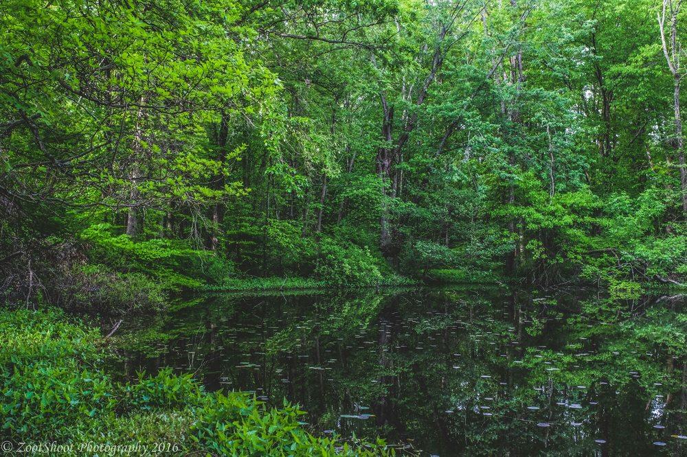 A pond at Blacklick Woods Metro Park