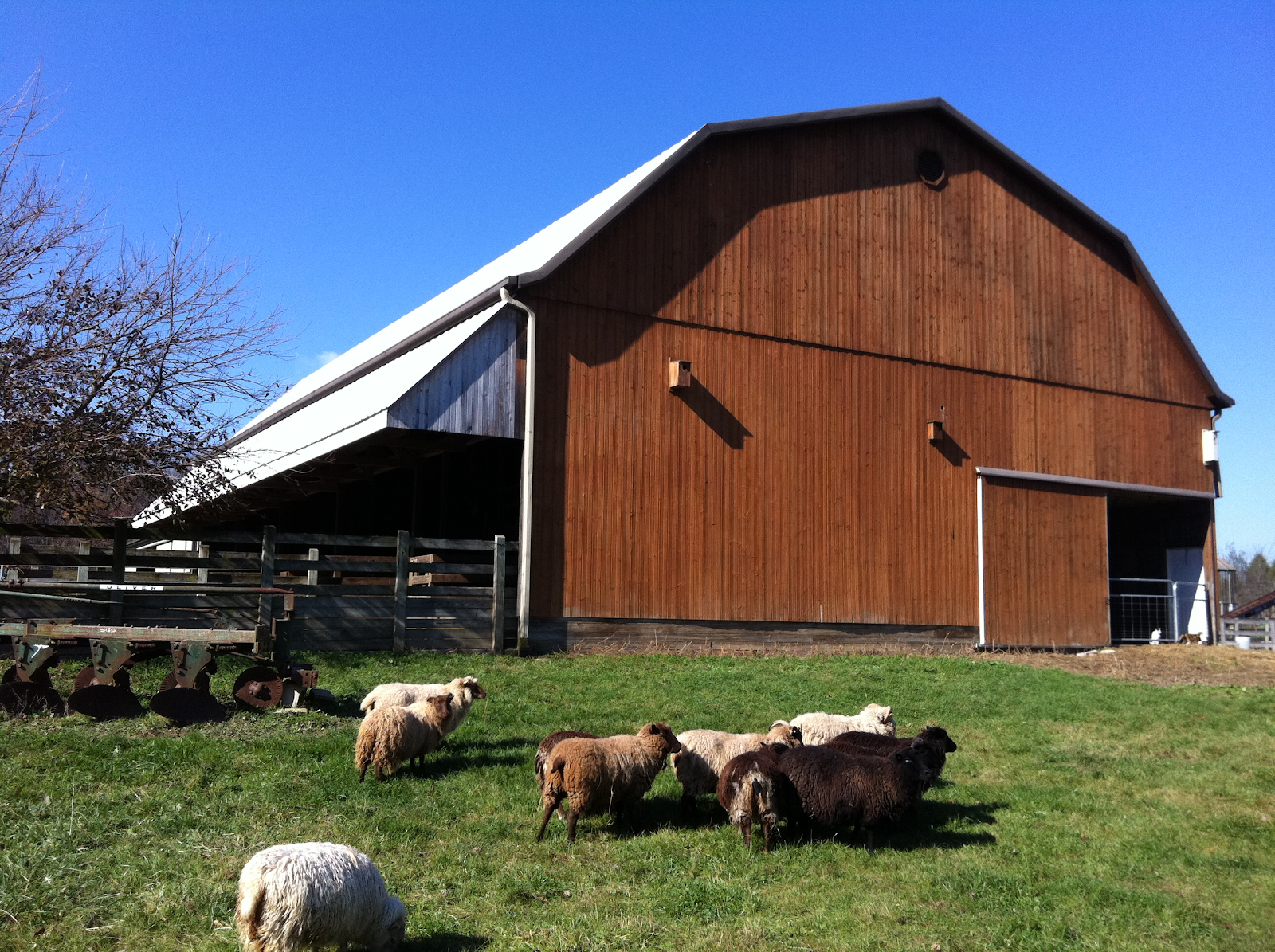 Sheep and a barn at Stratford Ecological Center in Delaware, Ohio