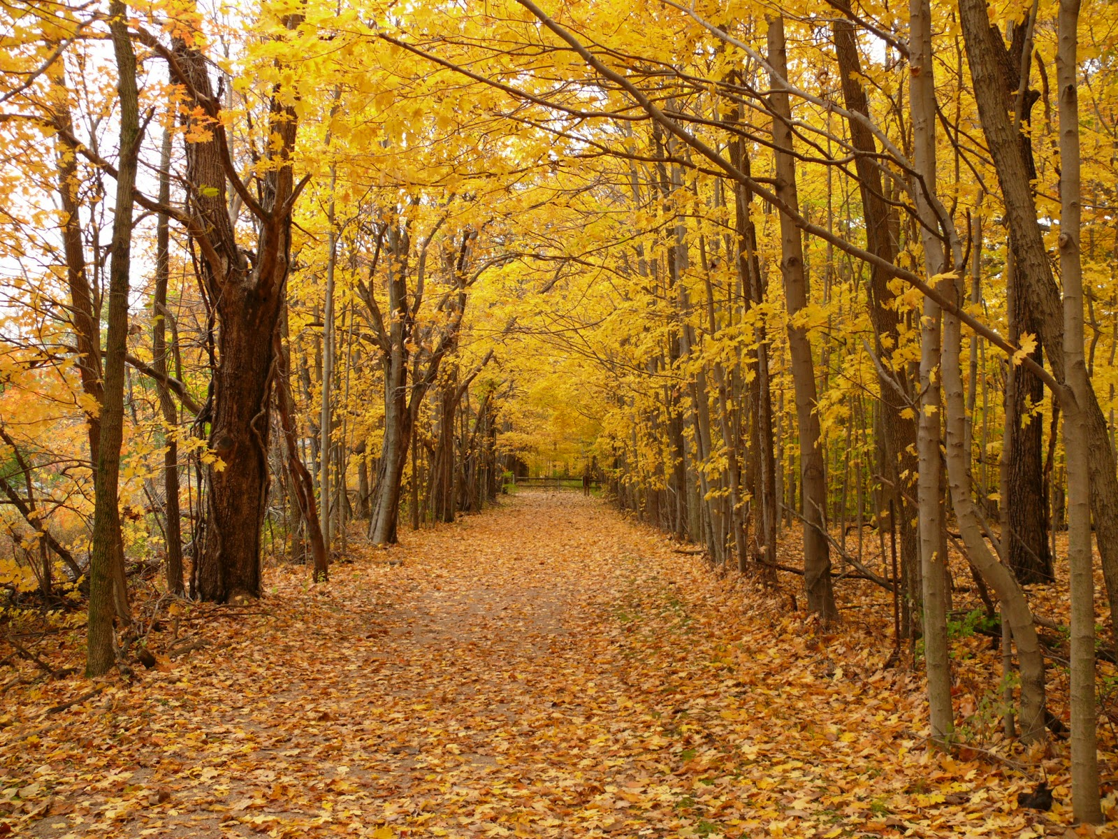fall trees in highbanks metro park