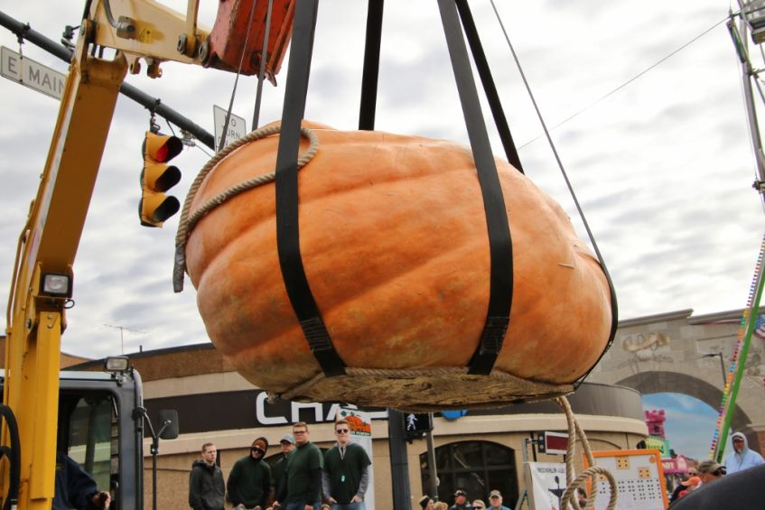 a crane lifts a giant pumpkin for the weigh-in at the circleville pumpkin show