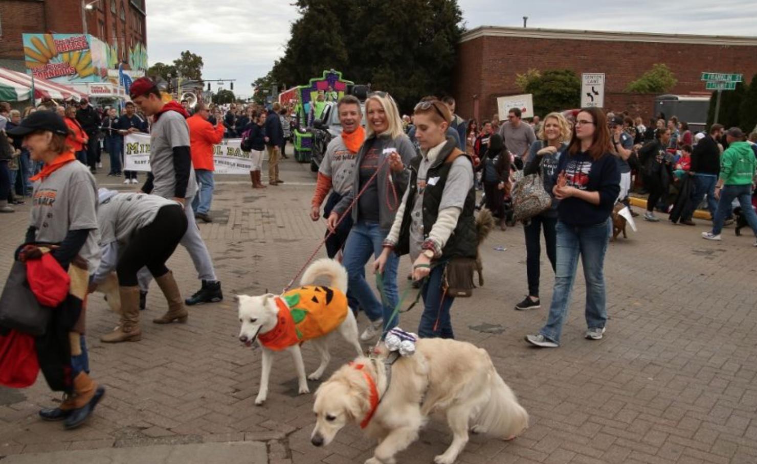 participants walk two dogs dressed as pumpkins at the circleville pumpkin show pet parade