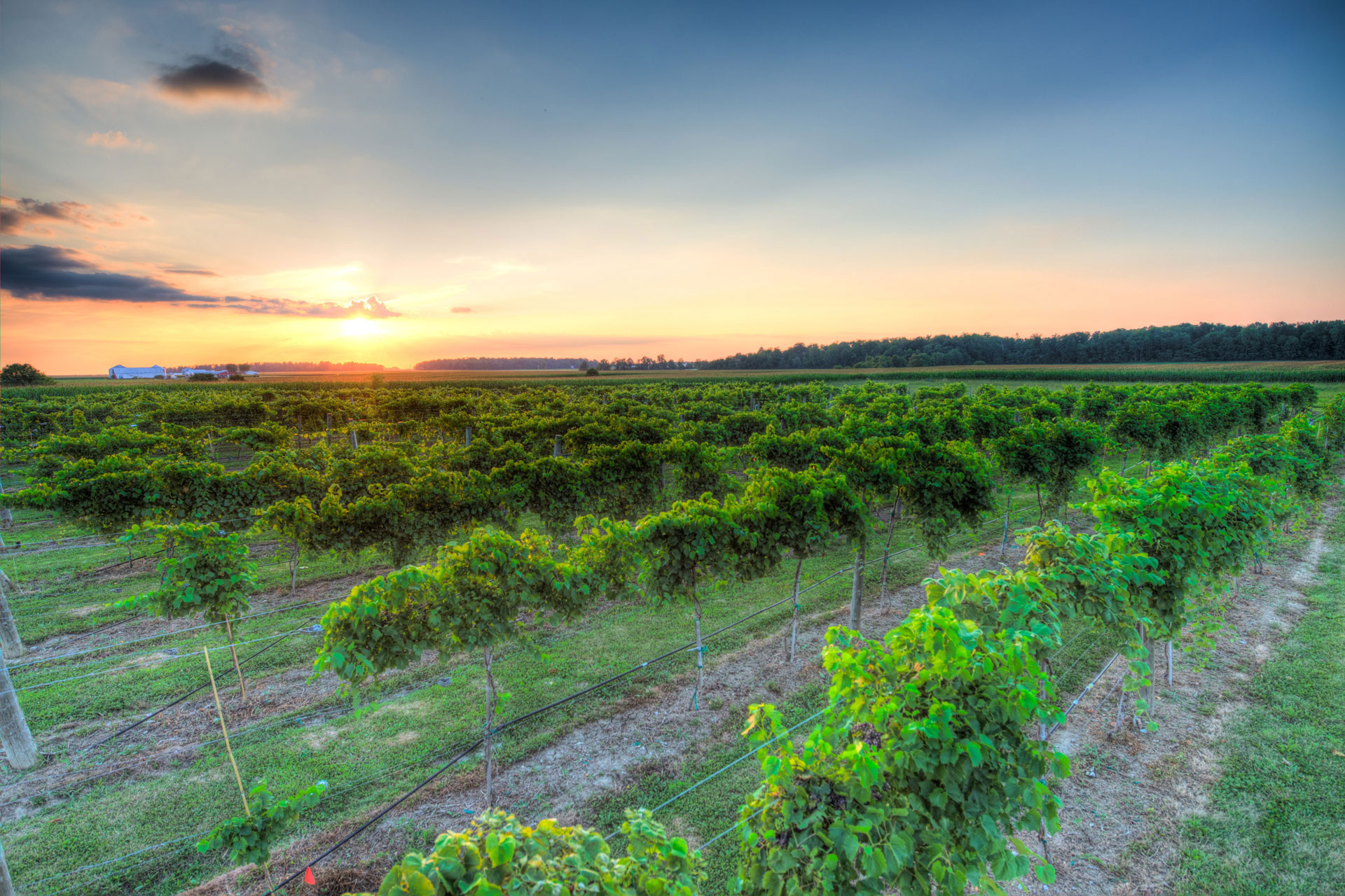 Winery at Versailles - Versailles vineyard at sunset