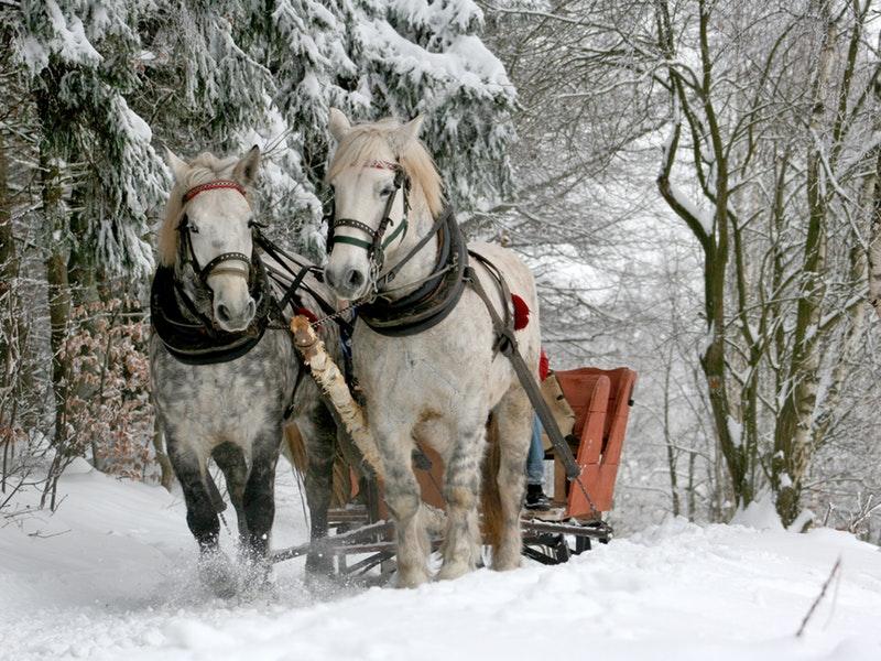 horse drawn carriage through the snow