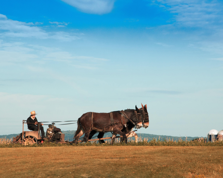 An amish horse cart on farmland