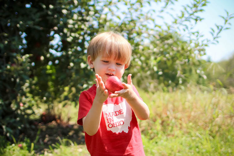 A&M Farm Orchard a little boy plays with an apple in a field