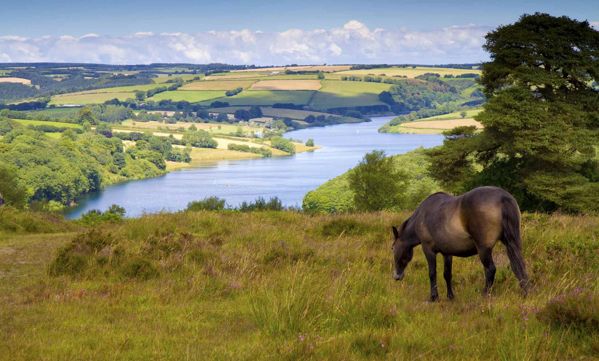 Exmoor holiday cottage view with ponies above the lake