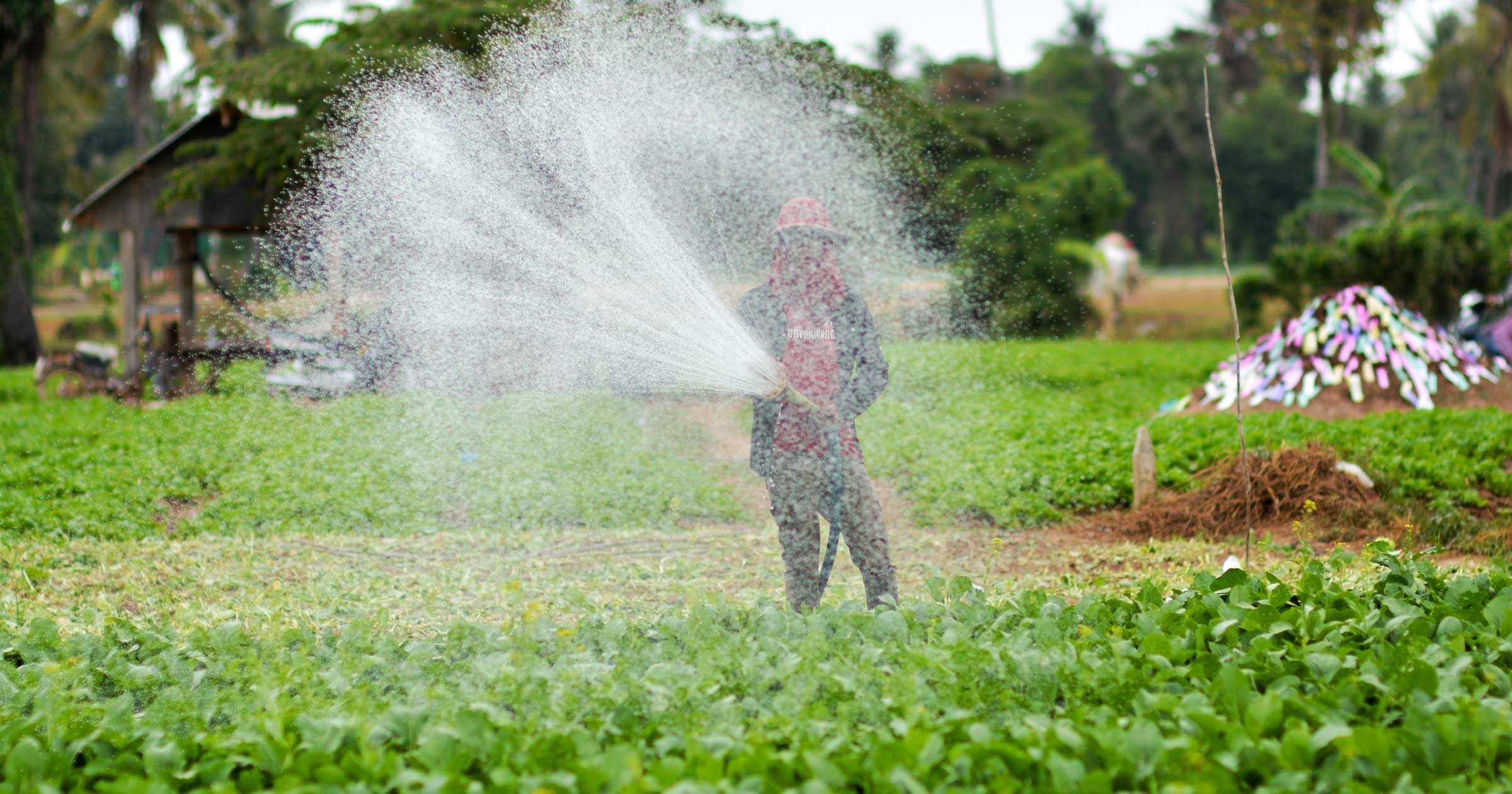 Photo of Cambodian farmer spraying irrigation from groundwater.