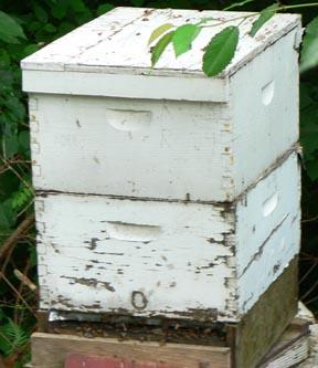 Cascadia Venom Collection honey bee relocation