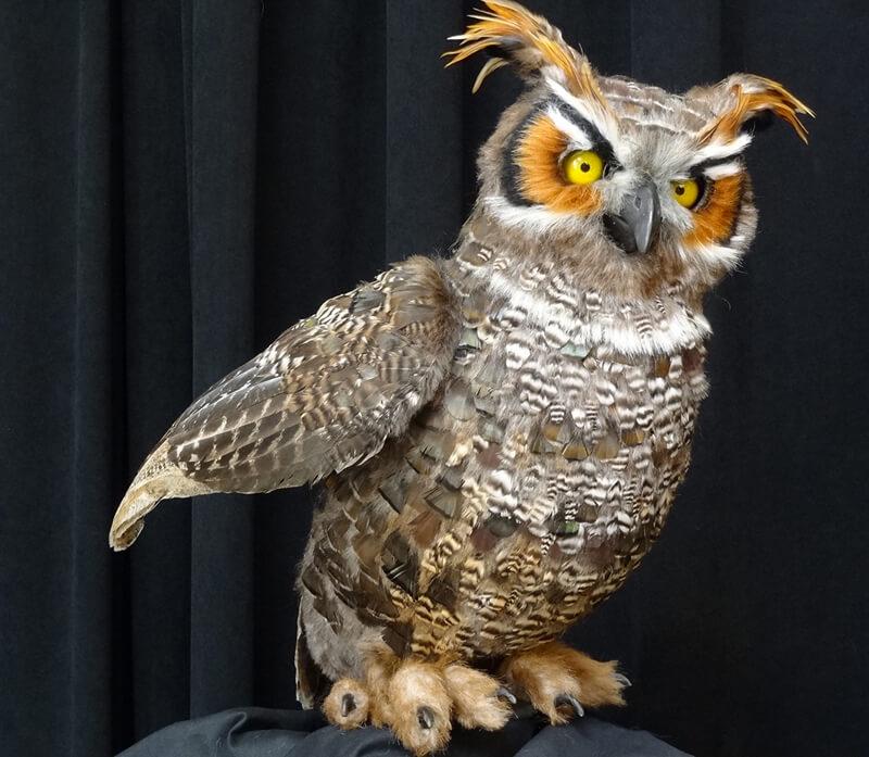 Storytelling Owl