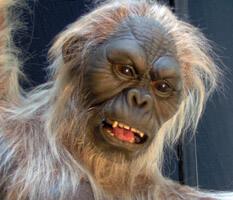 Male Dryopithecus