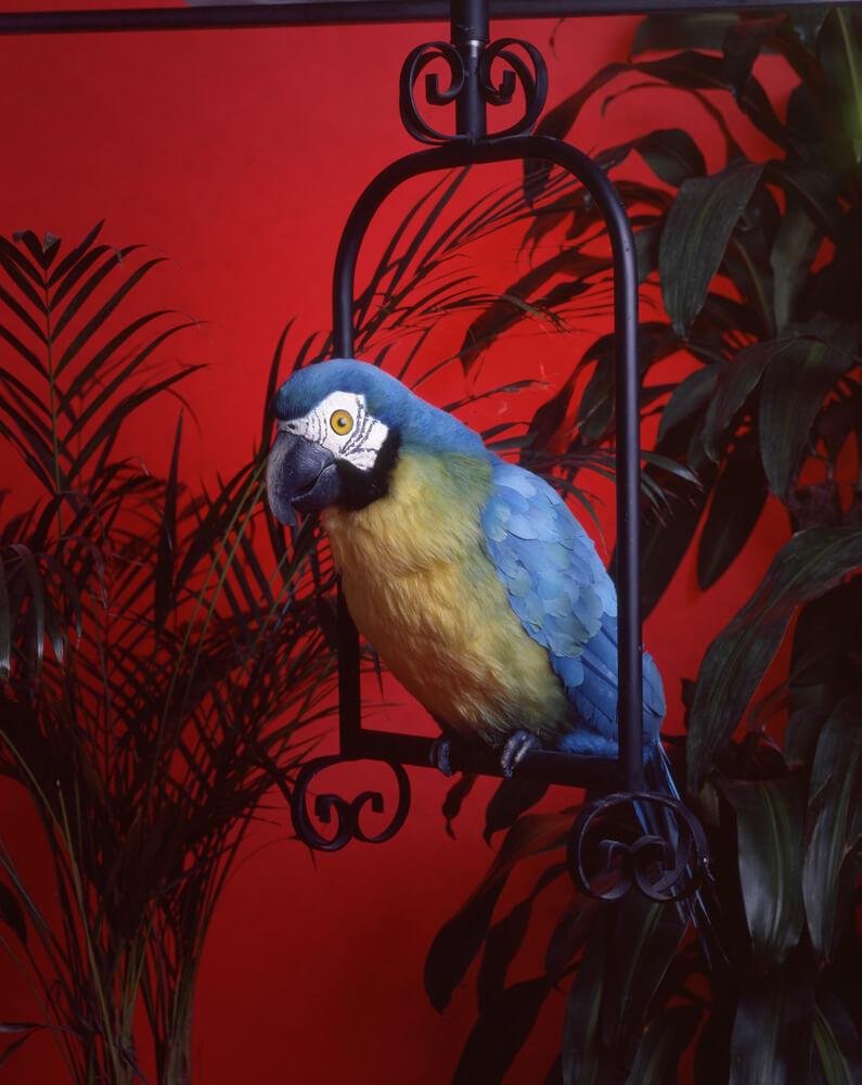 Perched Parrot