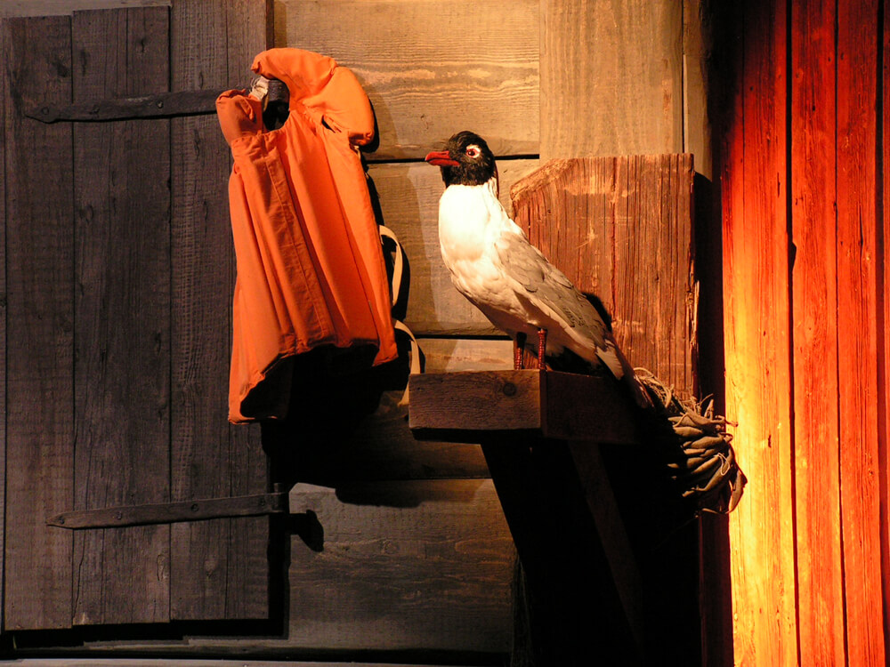 Seagull Vi Pa Saltkrakan
