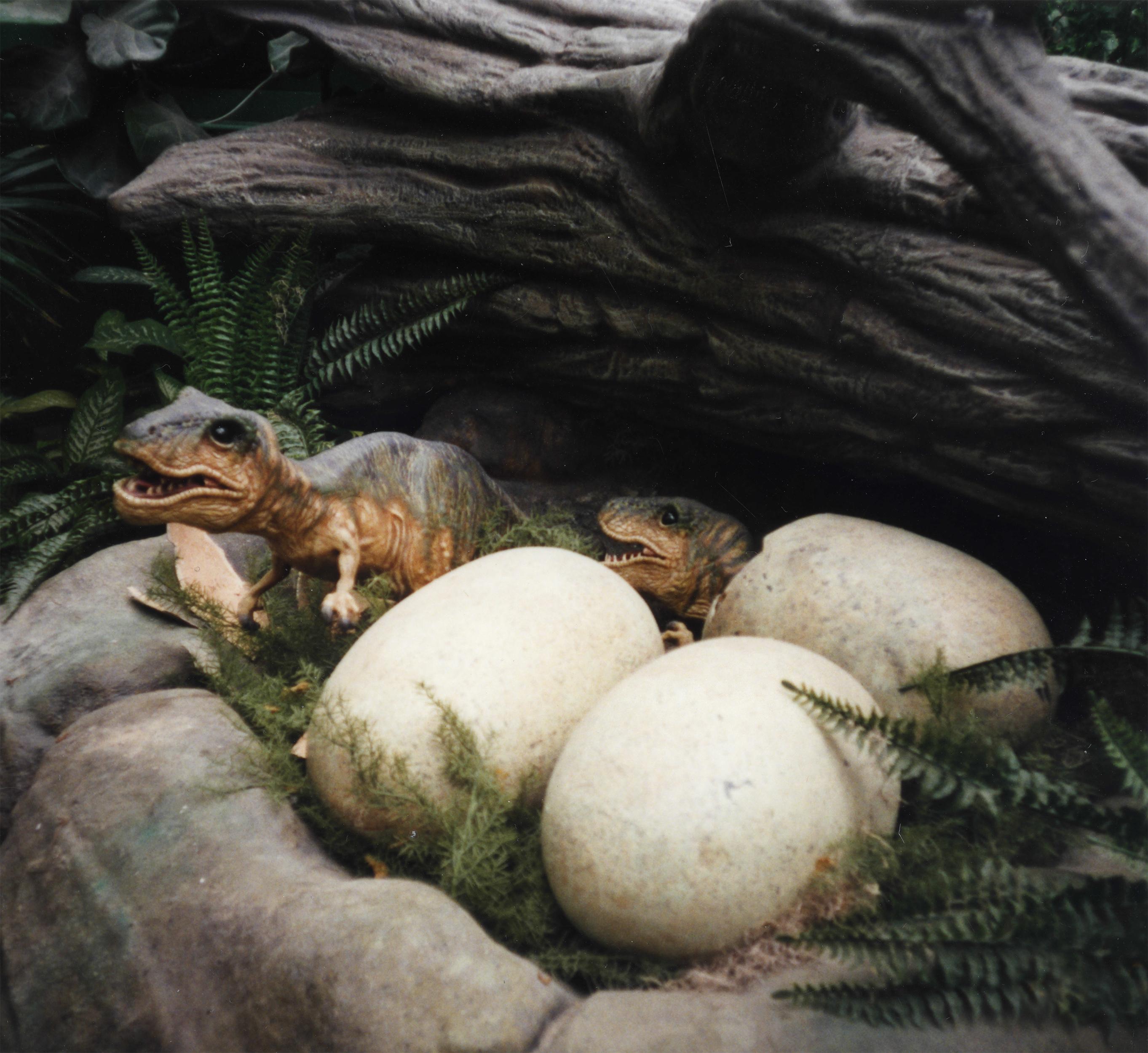T-Rex Hatchlings