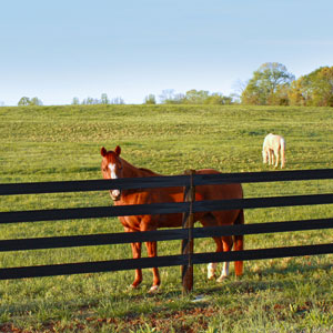 CenFlex Flexible Fence by Centaur