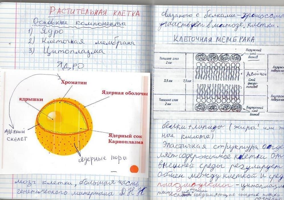 Пример комбинированного конспекта по биологии
