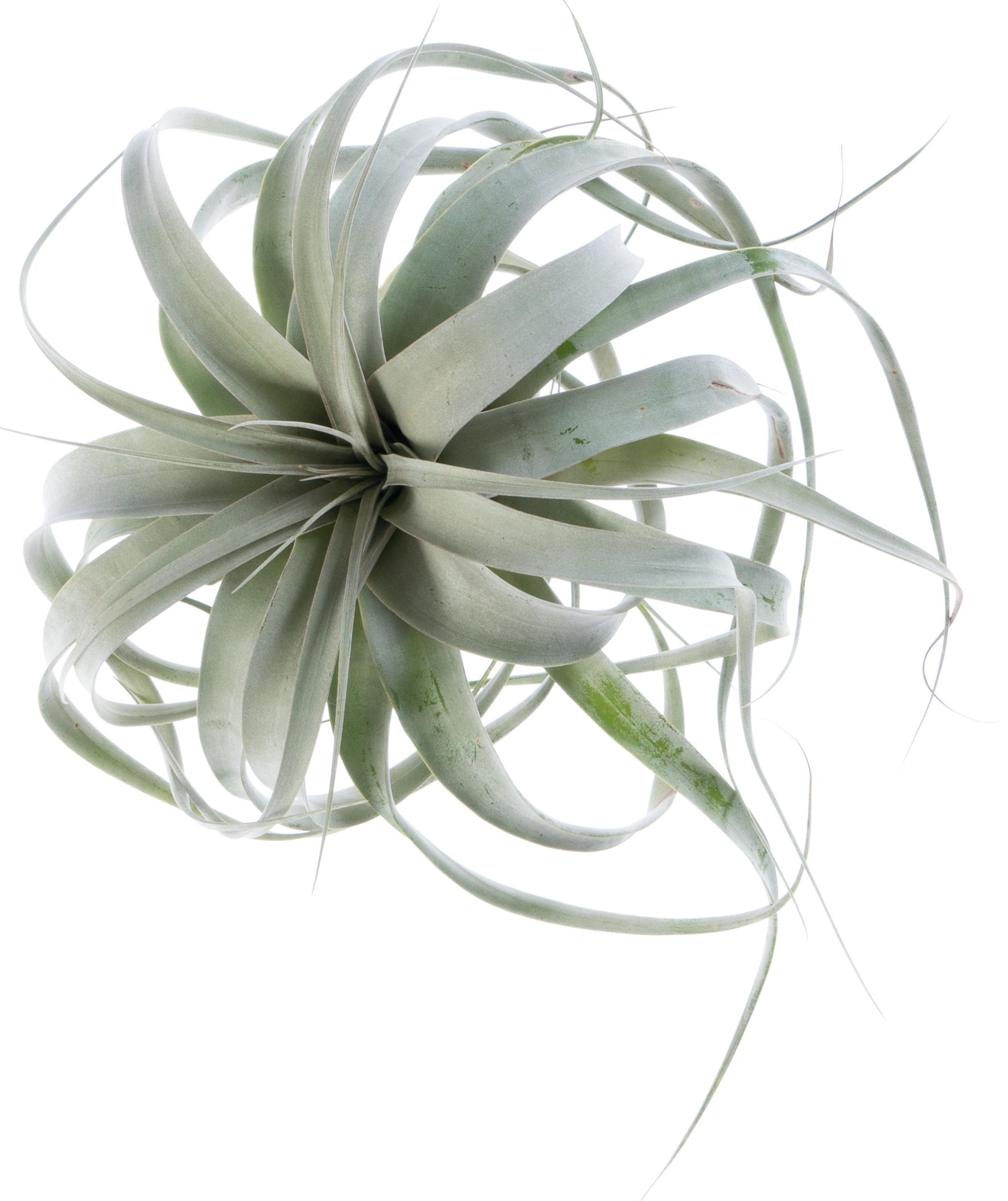 Small airplant