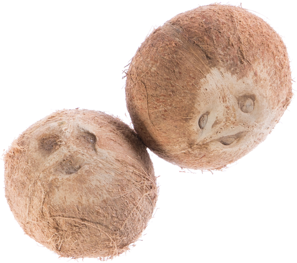I've got a lovely pair of coconuts
