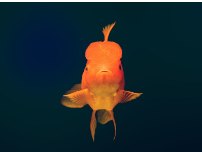 Do digital marketers have a goldfish problem?