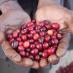 Honduras San Marcos кофе зерновой арабика