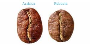 Зерна арабики и робусты, в чем различия?