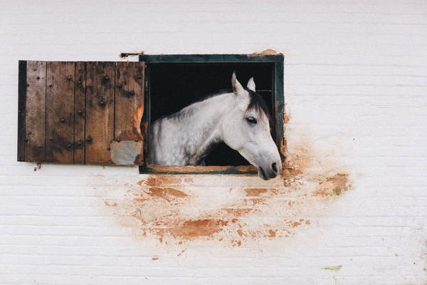 View Of A Horse In Stable