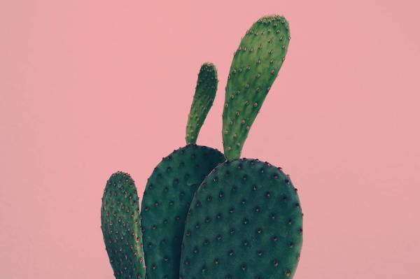 Close-Up Of Cactus Against Pink Background