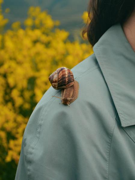 Close-Up Of Snail On Shoulder