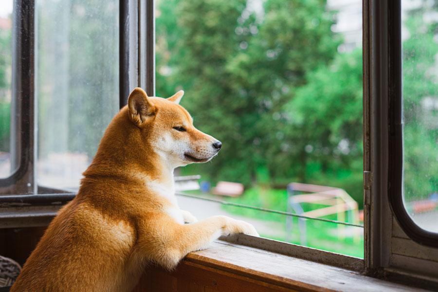 Podcast: Tenencia de Mascotas en Condominios