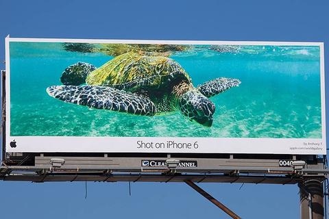 iPhone 6 turtle billboard