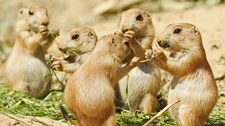 chipmunks-eating-lunch