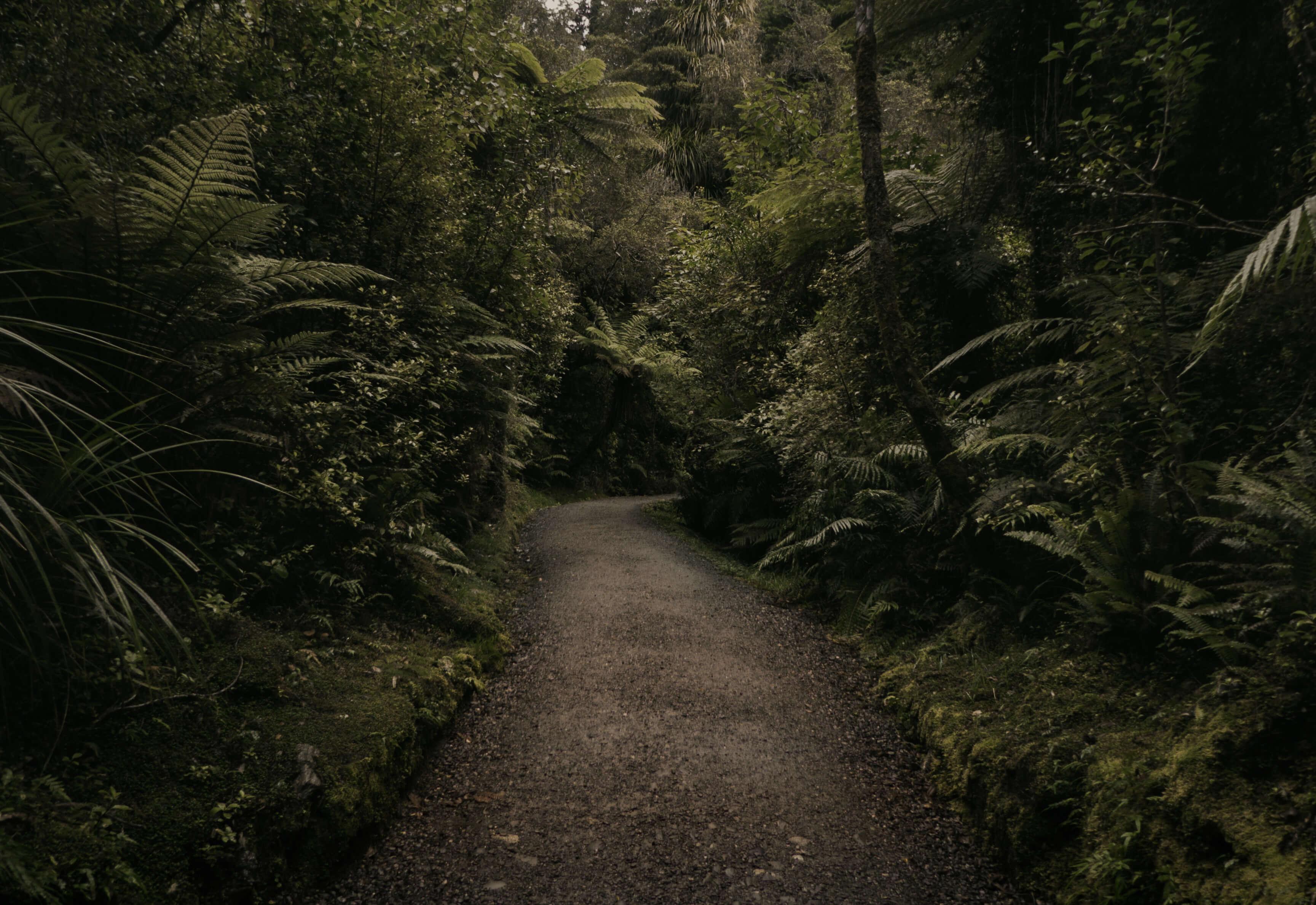 Department of Conservation - Anita Perkins