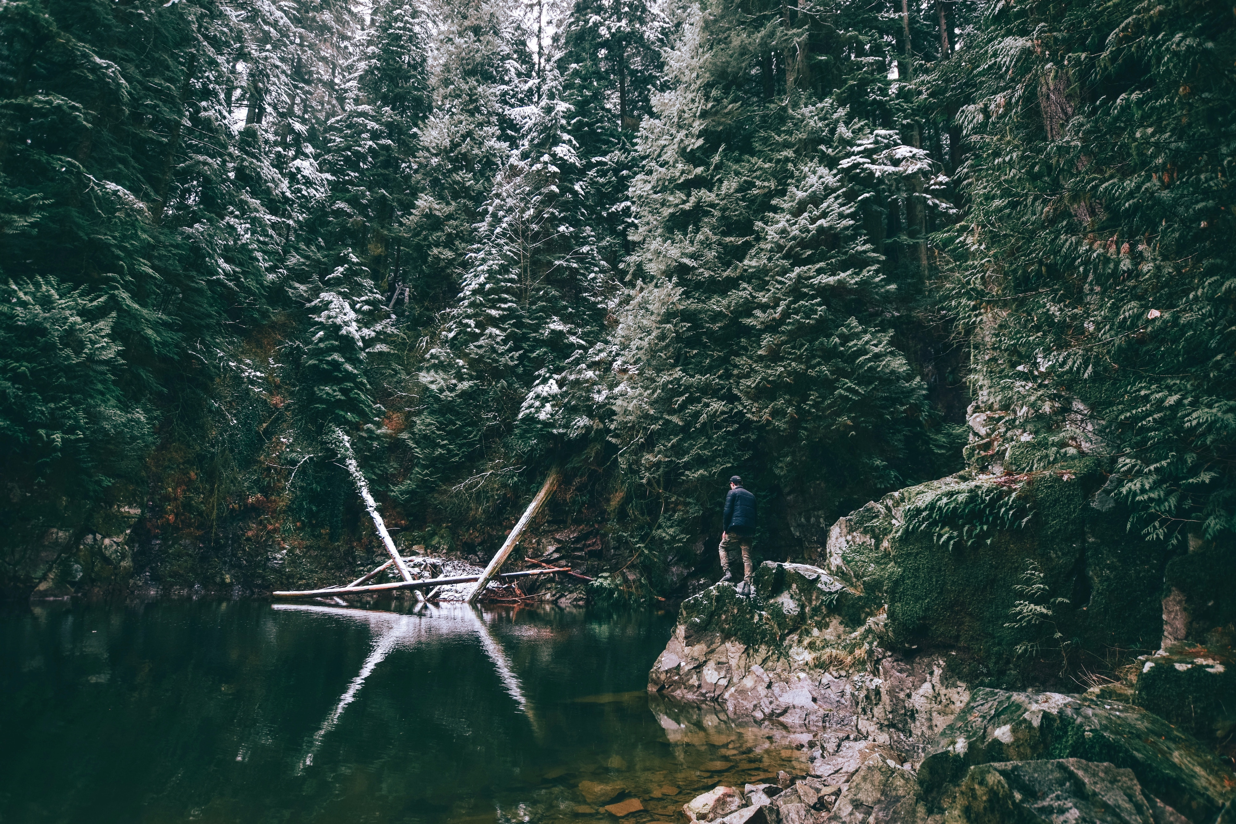 Remote Year Inspiring Places Photography Competition with Unsplash | Jeremey Allouche Forest Exploration