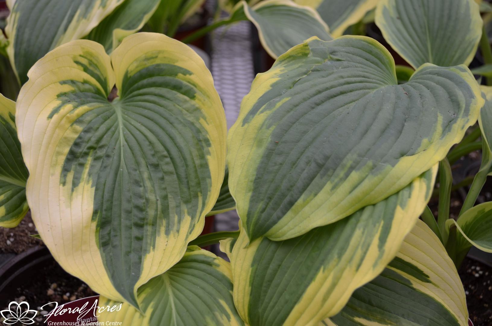 Perennials Floral Acres