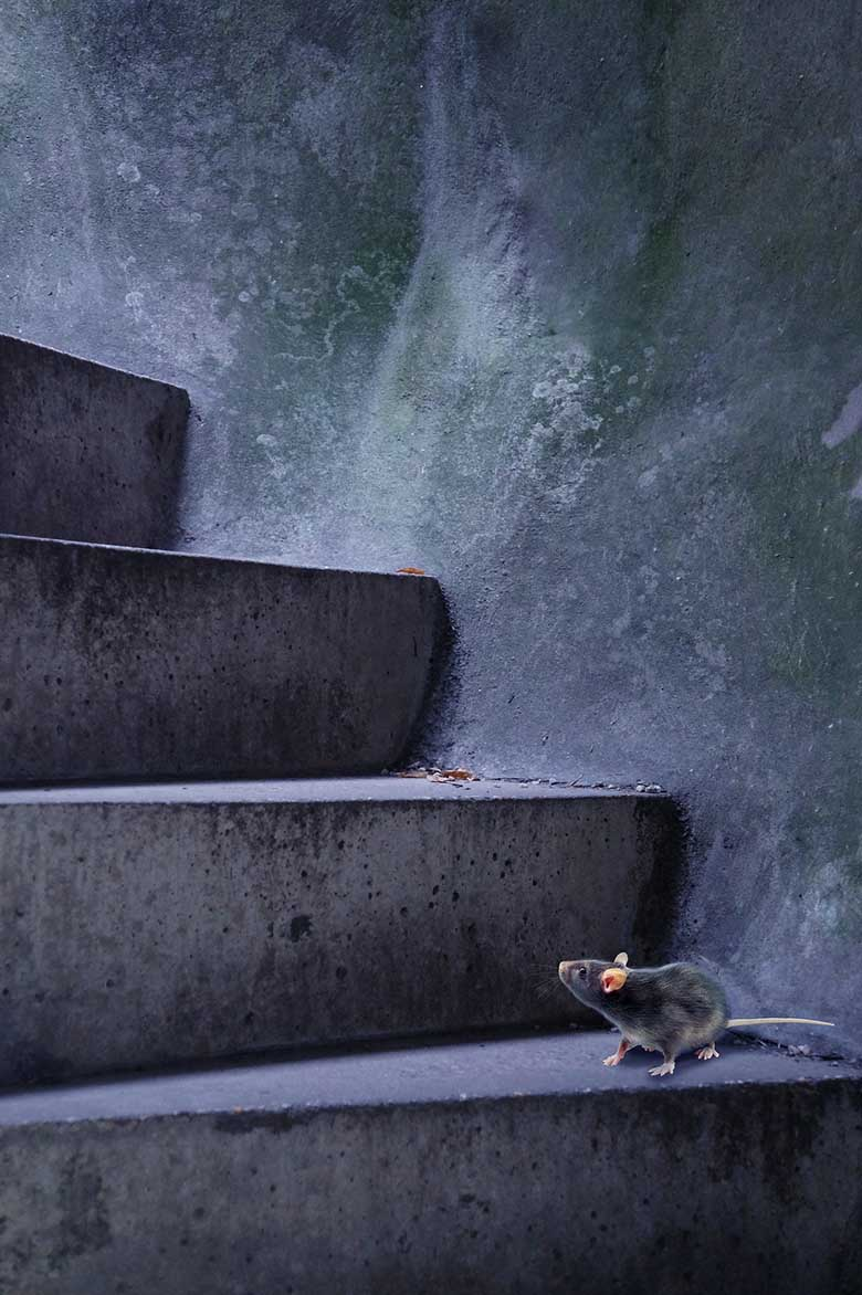 mouse on stairs