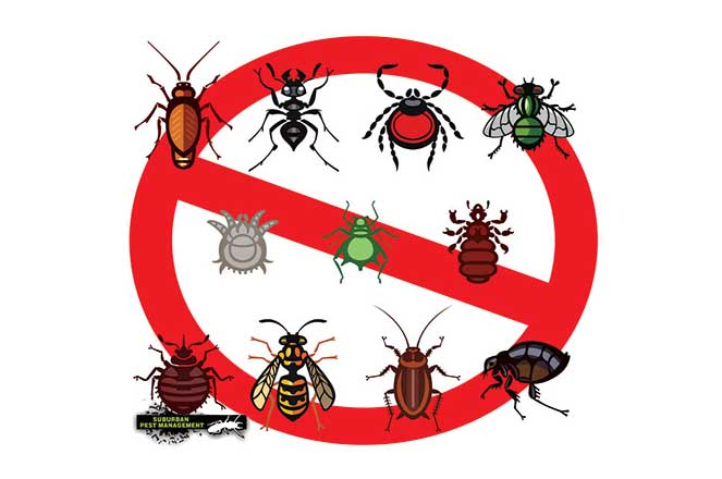 image of a range of common household pests