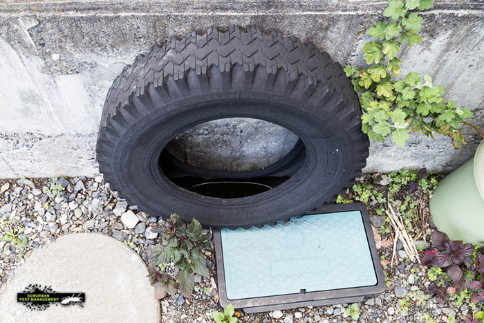 Building and pest inspections find used tyres that trap rainwater and risk becoming a mosquito breeding ground.
