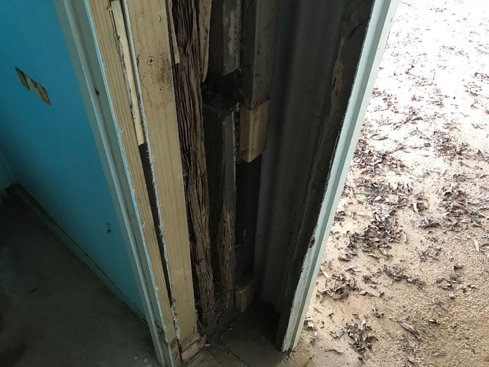 kitchen pest inspection