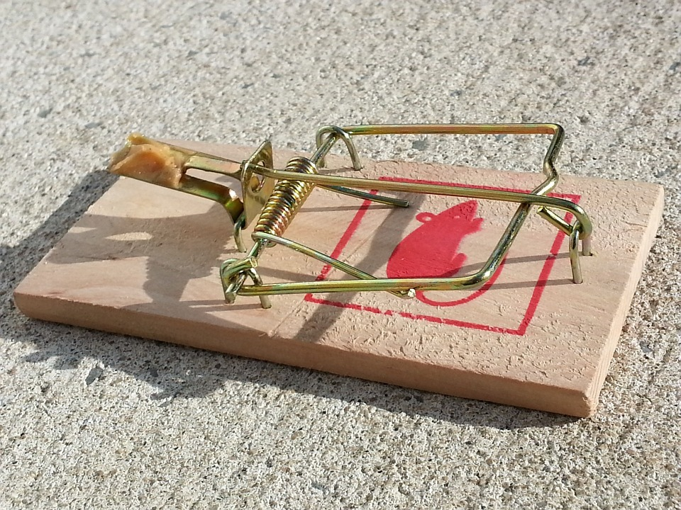When mouse traps, like this wooden spring-loaded trap with bait, fails call in rodent pest control services