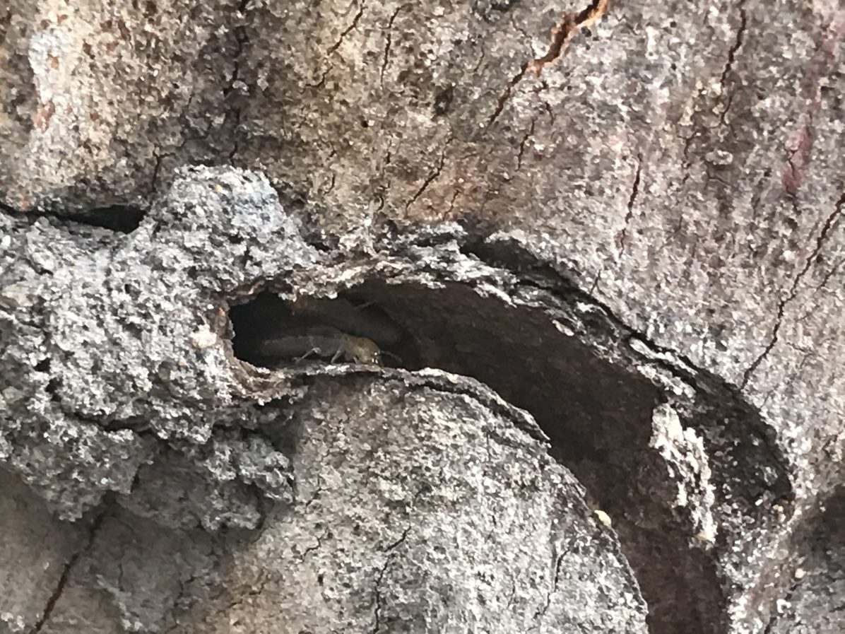 Pre-purchase pest inspections search inside and outside including trees for termites like those inside this tree stump