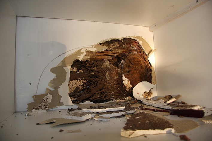 Termite damage to the wall in Bribie Island home