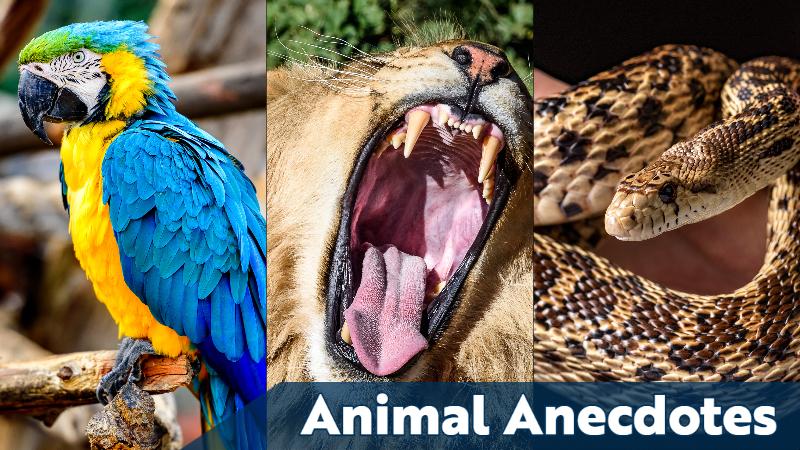 Animal Anecdotes